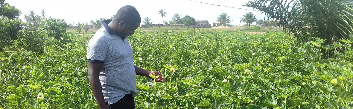 Hard work and hazard: Young people and agricultural commercialisation in Africa